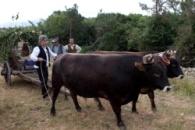La Nuova Sardegna 02 giugno 2012