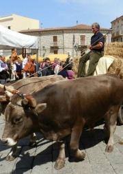 La Nuova Sardegna – 11 Aprile 2015